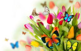 wiosna motylki
